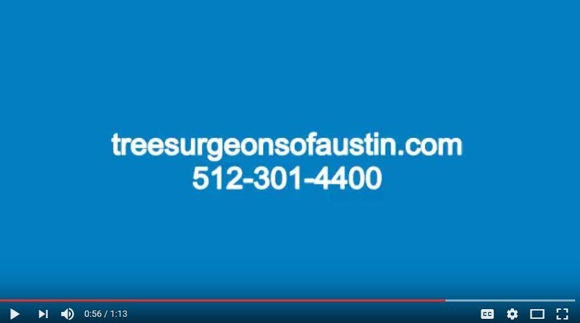 Austin Tree Service Video