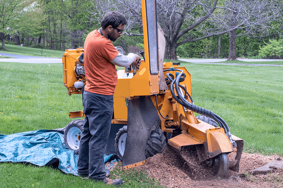 Stump Grinding Being Performed At A Home In Austin