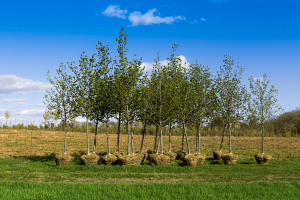 Tree Sales And Planting Services