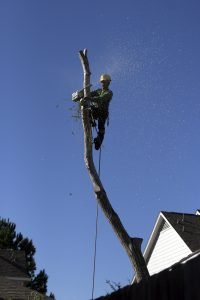 Tree Removal At A Home In Austin