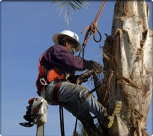 Tree Care During Hot Summers