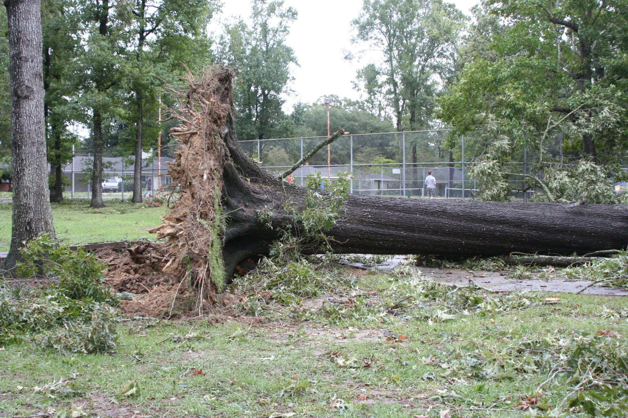 Uprooted Trees In Austin
